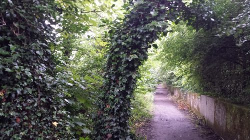 Explore along the Taff Trail